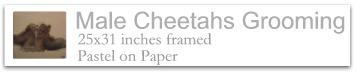 Male Cheetahs Grooming